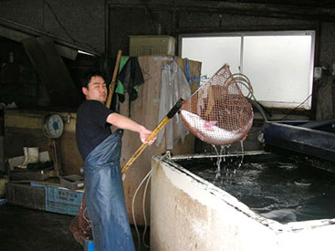 魚信の敏腕料理人
